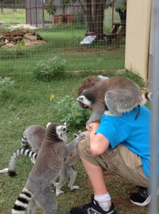That lemur's doing whaaaat?