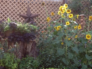 Frances told me the sunflowers grew from the seeds that feel out of the feeder.