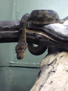 Snake at Ok Zoo